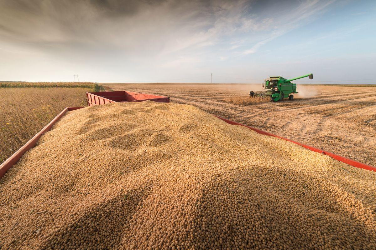 8成以上靠进口:中国为什么要买这么多大豆?
